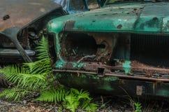 Paproć z ośniedziałymi samochodami zdjęcia royalty free