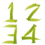 paproci zieleni odosobniona liść liczba Zdjęcie Stock