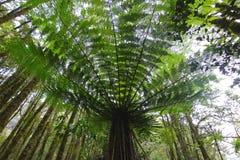 Paprocie i inna roślinność w Milford dźwięku, Nowa Zelandia fotografia royalty free