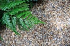 Paprocie i kamień podłoga Fotografia Stock