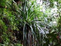 Paprocie i palmy przy namorzynowym tropikalnym lasem deszczowym, Borneo, Malezja obrazy royalty free