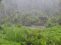 Paprocie i palmy przy namorzynowym tropikalnym lasem deszczowym, Borneo, Malezja zdjęcia stock