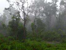 Paprocie i palmy przy namorzynowym tropikalnym lasem deszczowym, Borneo, Malezja fotografia royalty free