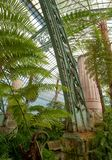 Paprocie i palmy we wnętrzu imponująco Wintergarden, część Królewskie szklarnie przy Laeken, Bruksela, Belgia zdjęcia royalty free