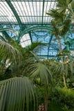 Paprocie i palmy we wnętrzu imponująco Wintergarden, część Królewskie szklarnie przy Laeken, Bruksela, Belgia obraz royalty free