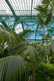 Paprocie i palmy we wnętrzu imponująco Wintergarden, część Królewskie szklarnie przy Laeken, Bruksela, Belgia obrazy royalty free