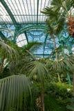 Paprocie i palmy we wnętrzu imponująco Wintergarden, część Królewskie szklarnie przy Laeken, Bruksela, Belgia obrazy stock