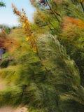 Paprocie i roślinności dmuchanie w wiatrze Fotografia Royalty Free