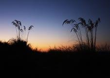 Paprocie Południowa wyspa Zdjęcie Stock