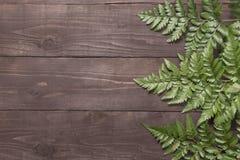 Paprocie są na drewnianym tle dla twój teksta Zdjęcia Stock