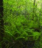 Paprocie w Bagiennym terenie blisko zlew, Smokies NP Fotografia Royalty Free