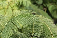 Paprocie w lesie, zieleń Zdjęcie Royalty Free