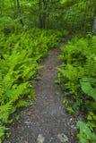 Paprocie & Wildflowers, Greenbrier, Great Smoky Mountains NP Zdjęcie Stock