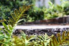 Paprocie woko?o drzewnego fiszorka w lesie, oko pozioma punkt widzenia Tekst przestrze? zdjęcia royalty free