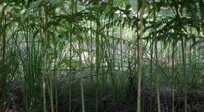 paprociowa dżungli Zdjęcie Stock