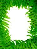 paprociowa dekoracyjna kwiecista rama Obraz Stock