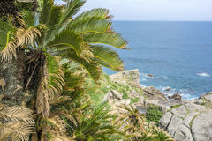 Paprociowa palma i morze Obraz Royalty Free