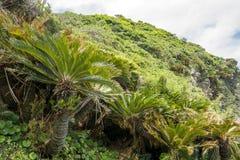 Paprociowa palma w wzgórzu Obraz Stock