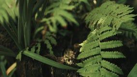 Paprociowego liścia naturalny tło zdjęcie wideo