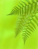 paprociowi liść Zdjęcie Royalty Free