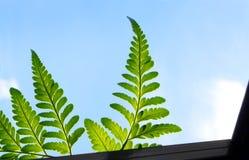 Paprociowi liście, światło słoneczne nad nadokiennym parapetem zdjęcia royalty free
