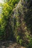 Paprociowy jar, Kalifornia, usa Obrazy Royalty Free