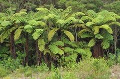 Paprociowy las Obrazy Stock