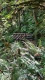 Paprociowy las Zdjęcie Stock