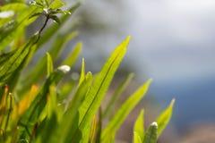 Paprociowy liść z makro- Zdjęcie Stock
