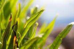 Paprociowy liść z makro- Fotografia Stock