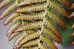 Paprociowy liścia starzenia się proces Abstrakcjonistyczny organicznie kwiecisty deseniowy tło zakończenie fotografia, selekcyjna Obrazy Stock