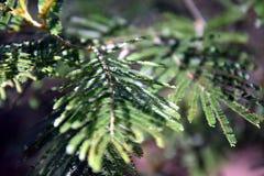 paprociowy zamknięty paprociowy liść obrazy stock