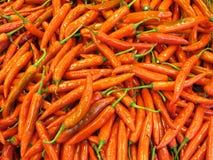 papryka chili czerwone Fotografia Royalty Free