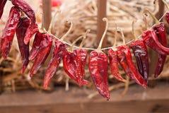 papryki czerwień Fotografia Royalty Free