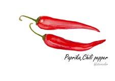 Papryki lub Chili pieprz Ręka rysujący akwarela obraz na białym tle również zwrócić corel ilustracji wektora Obraz Royalty Free
