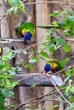 Papuga, życzliwi zwierzęta przy Praga zoo Zdjęcie Stock