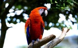 papuga obrazy stock