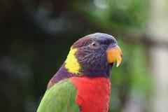 Papuga 2 Zdjęcia Stock