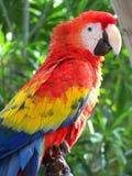 papuga 2 zdjęcia royalty free