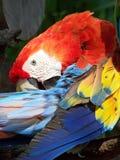 papuga 3 Obrazy Stock
