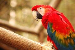 papuga 4 zdjęcie stock