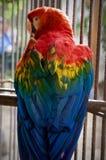 papuga barwna Fotografia Stock