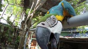 Papuga chce jeść sedno zbiory