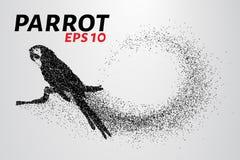 Papuga cząsteczki Papuzi obsiadanie na gałąź robić up mali okręgi również zwrócić corel ilustracji wektora Zdjęcie Royalty Free