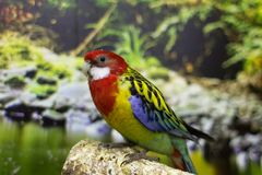 Papuga jaskrawi kolory fotografia stock