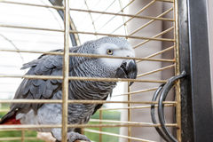 papuga klatki Fotografia Stock