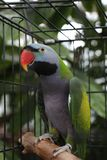 papuga klatki zdjęcie stock