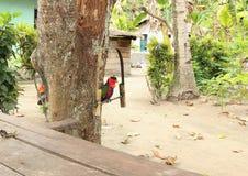Papuga na bambusie Obrazy Royalty Free