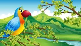Papuga na gałąź drzewo ilustracja wektor