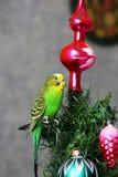 Papuga na nowego roku drzewie zdjęcie stock
